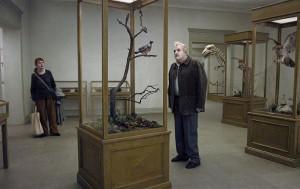 Un pigeon perche sur une branche