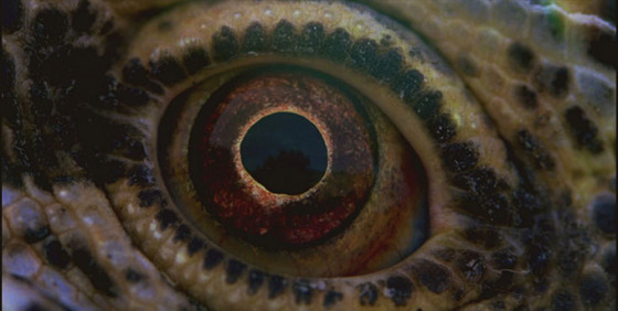 Voyage of Time de Terrence Malick