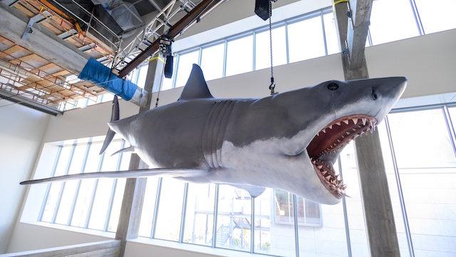 Bruce le requin des Dents de la Mer - Jaws - Musee des Oscars